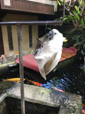 Ubud_ibuoka_bird